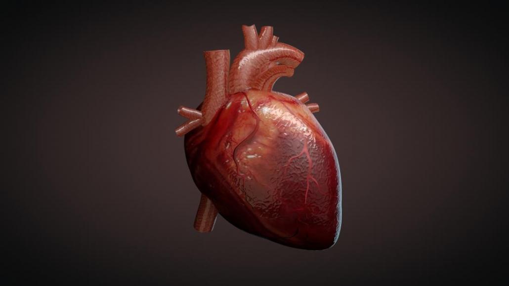 فصل قلب زیست