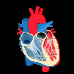 دانلود فیلم آموزشی فصل قلب زیست به روش رمزگردانی